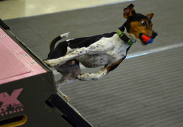 Copy of 44084777-FLYBALL13-59
