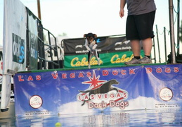 Dock 20Dogs 20169