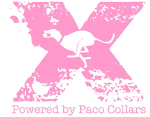 X flyball: powered by Paco Collars